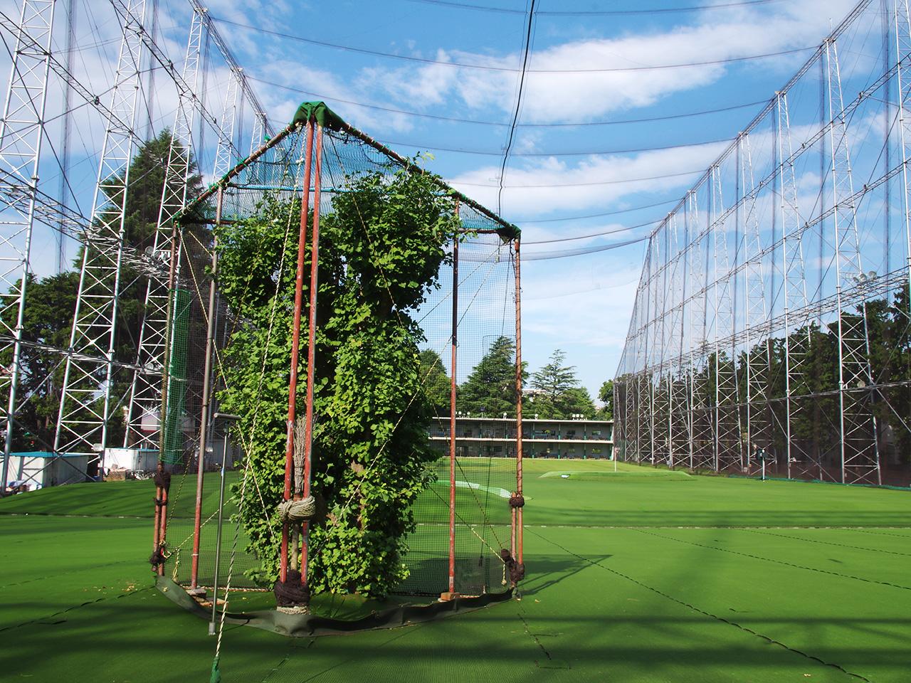 フェアウェイ奥の銀杏の木。開業以来大切にしているご神木です。